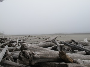 The beach at  Kalaloch