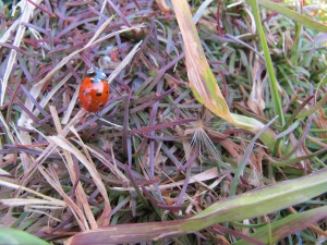 Lucky lady bug sighting at a random lunch spot. One landed one me whilst riding the other day & I cried with overwhelming joy. It's the little things indeed.
