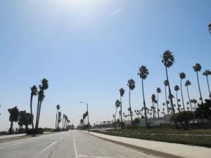 The wind is just starting and you can see the classic California palms starting to sway