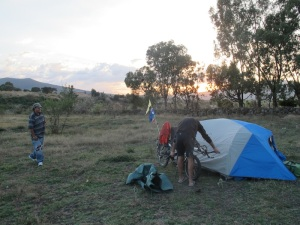 Wild camping under some gum trees