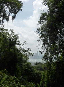 A peek through the jungle of Panama City from the hike up Ancon Hill