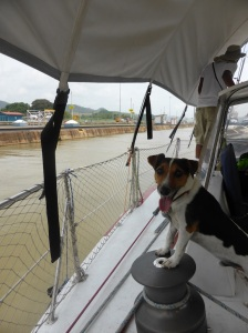 First mate 'Eddie' the Jack Russell