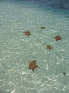 Que? Starfish South Cross!