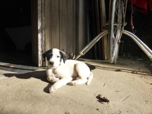 My new puppy at the Casa. I call him Doofus cos he is a bit dumb. But so gorgeous!