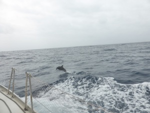 So many dolphins but only this guy jumped for the camera.