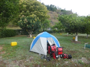A campsite in an orchard ticks a few boxes