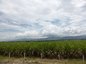 Flat lands means sugar cane fields. The smell is awesome.