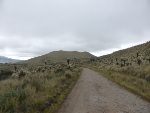 Off road in the paramo