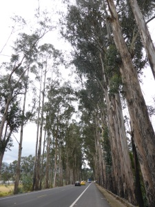 With gumtrees lining the roads, sometimes we feel as though we could already be in Australia