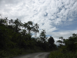 The Amazon route from Kimbiri
