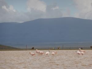 Hola flamingos!