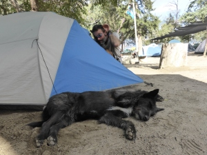 She slept outside our tent. Even Bren developed a soft spot for her.