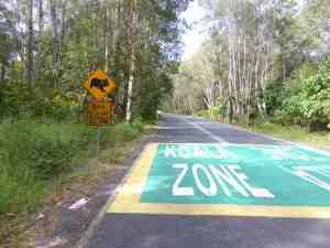 Koala Zone