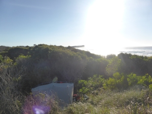 Camping in the sand dunes at Dunbogan beach.