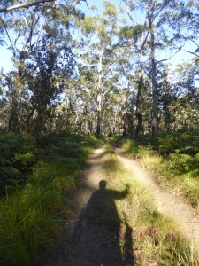 A gorgeous beach track through sand had me constantly searching for koalas on the trees